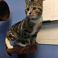 Adopt A Pet :: GOOBER - Canfield, OH