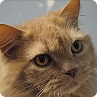Adopt A Pet :: Duke - Osage Beach, MO