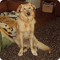 Adopt A Pet :: Bailey - Hamilton, ON