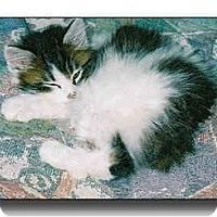 Adopt A Pet :: Tara - Howell, MI