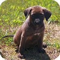 Adopt A Pet :: Yazmine - Brattleboro, VT