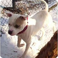 Adopt A Pet :: Thor - Antioch, IL