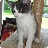 Adopt A Pet :: Omar - N. Billerica, MA