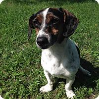 Adopt A Pet :: Kelee - Rochester, MN