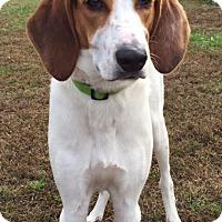 Adopt A Pet :: Hollywood - Richmond, VA