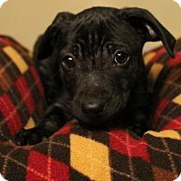 Adopt A Pet :: Daisy - Sudbury, MA