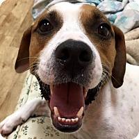 Adopt A Pet :: Alfalfa - Jersey City, NJ