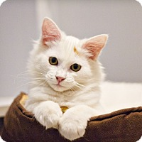 Adopt A Pet :: Harvest - Lincoln, NE