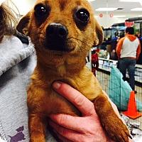 Adopt A Pet :: Woody - Fresno, CA