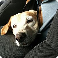 Adopt A Pet :: Valentina - Buckeystown, MD