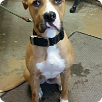 Adopt A Pet :: # 6 URGENT! - Carrollton, OH