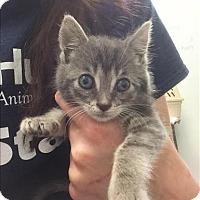 Adopt A Pet :: Sephora - Madison, NJ