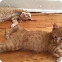 Adopt A Pet :: Rick - St. Louis, MO