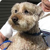Adopt A Pet :: Dan McGrew - Salem, OR