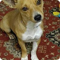 Adopt A Pet :: Sassy (pending) - Coldwater, MI