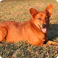 Adopt A Pet :: Lilah - Albany, NY