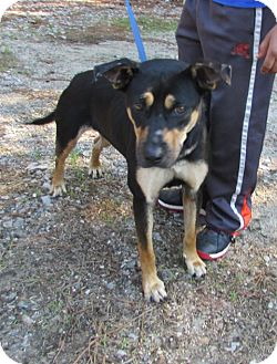 Labrador Retriever Mix Dog for adoption in Warrenton, North Carolina - Miya