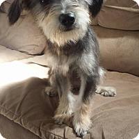 Adopt A Pet :: Camila - San Diego, CA