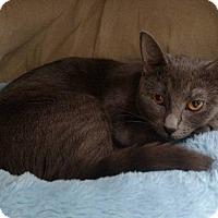 Adopt A Pet :: Teegan - Austintown, OH
