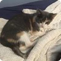 Adopt A Pet :: Leighann - Shelbyville, KY