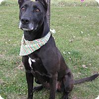 Adopt A Pet :: Lilly - Menomonie, WI