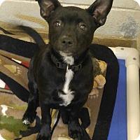Adopt A Pet :: 1-10 Rascal - Triadelphia, WV
