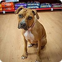 Adopt A Pet :: Cybil - Birmingham, MI