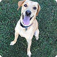 Adopt A Pet :: Milo - Marietta, GA