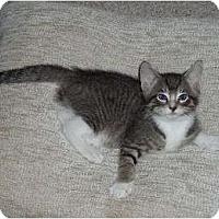 Adopt A Pet :: Smudge - Dixon, IL - Montgomery, IL