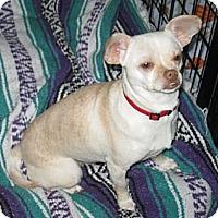 Adopt A Pet :: Pandora - Tumwater, WA