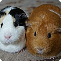 Adopt A Pet :: Blossom & Buttercup - Brooklyn Park, MN