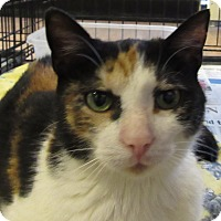 Adopt A Pet :: Patches - Leamington, ON
