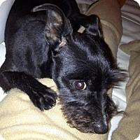 Adopt A Pet :: Phoebe - San Francisco, CA