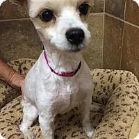 Dog Adoption Events Rochester Ny