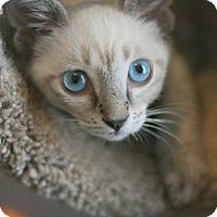 Adopt A Pet :: Morocco - Canoga Park, CA