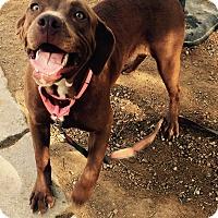 Adopt A Pet :: Canela - Los Angeles, CA