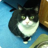 Adopt A Pet :: Luxxy - Pompton Plains, NJ