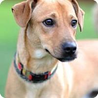 Adopt A Pet :: Gizmo - Sunnyvale, CA