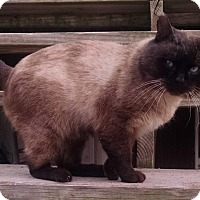 Adopt A Pet :: George - Rochester, MI