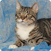 Adopt A Pet :: Jax - Elmwood Park, NJ
