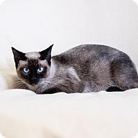 Adopt A Pet :: Precious - Cuero, TX