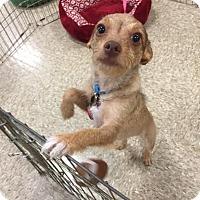 Adopt A Pet :: Delilah PUPPY - tampa, FL