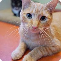 Adopt A Pet :: Pete - Alameda, CA