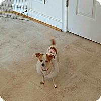 Adopt A Pet :: Minnie - Woodbridge, VA