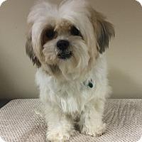 Adopt A Pet :: Arlo - La Verne, CA
