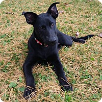 Adopt A Pet :: Porthos - Joliet, IL