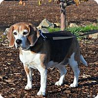 Adopt A Pet :: Gracie Bleu - Yreka, CA