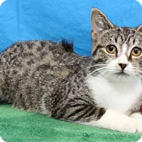 Adopt A Pet :: Moon - South Bend, IN