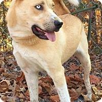 Adopt A Pet :: Skunkie - Washington, DC