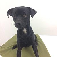 Adopt A Pet :: Leo - University Park, IL